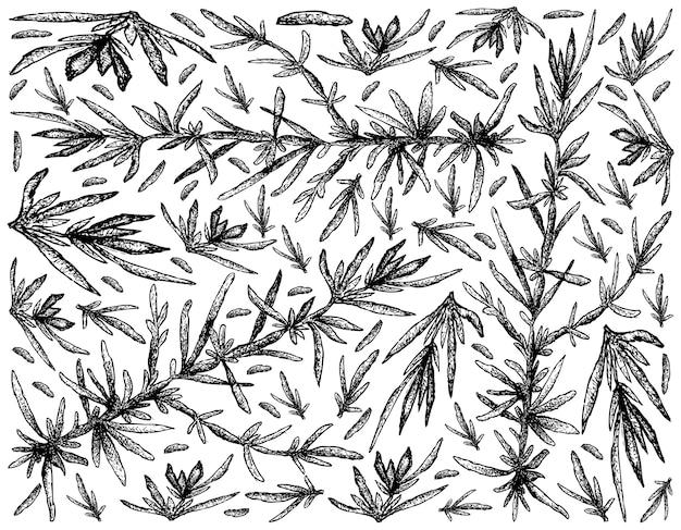 Ręcznie rysowane z wodorostów hijiki na białym tle