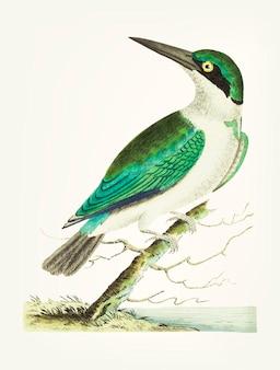 Ręcznie rysowane z zielonym głowiastym zimorodkiem