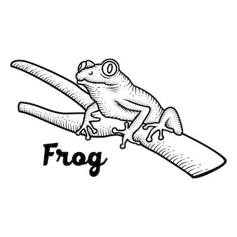 Ręcznie rysowane żaba