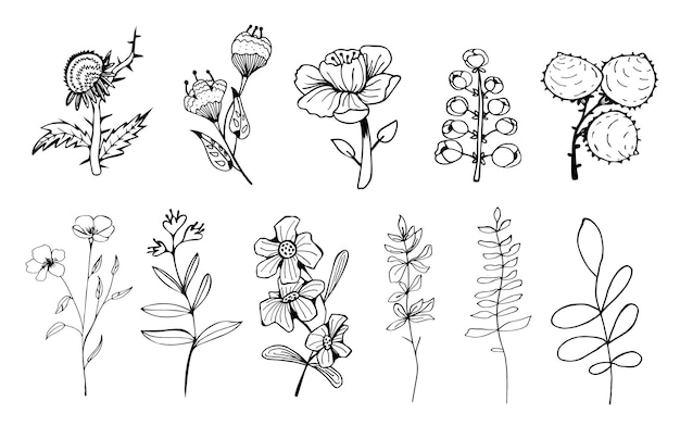 Ręcznie rysowane zarys elegancji kwiaty ilustracje.