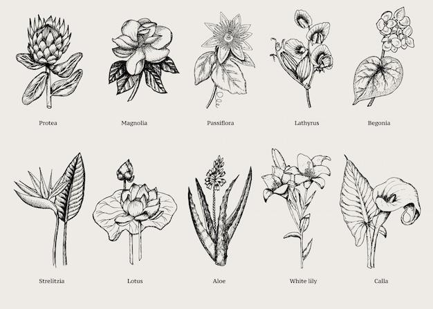 Ręcznie rysowane zestaw egzotycznych roślin