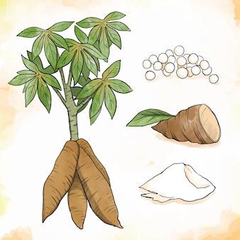 Ręcznie rysowane zestaw ilustracji tapioki