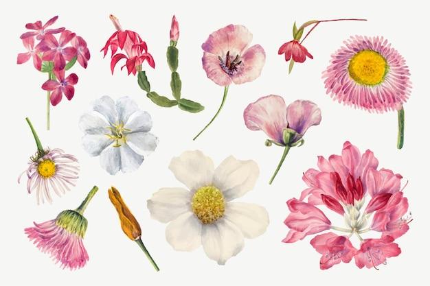 Ręcznie rysowane zestaw ilustracji z fioletowymi dzikimi roślinami, zremiksowany z dzieł mary vaux walcott