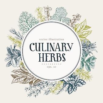 Ręcznie rysowane zestaw kulinarnych ziół i przypraw.