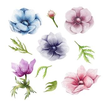 Ręcznie rysowane zestaw kwiatów anemonu