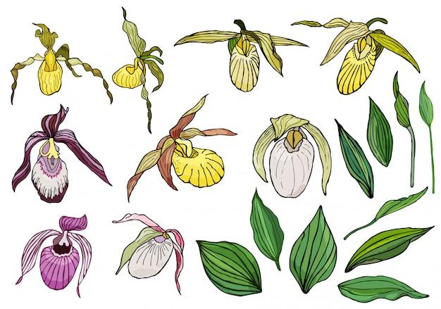 Ręcznie rysowane zestaw kwiatów orchidei.