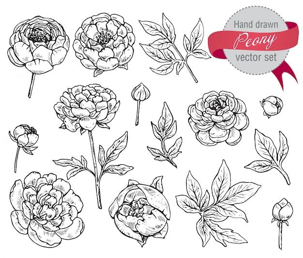 Ręcznie rysowane zestaw kwiatów piwonii