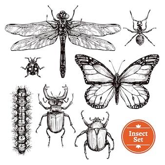 Ręcznie rysowane zestaw owadów