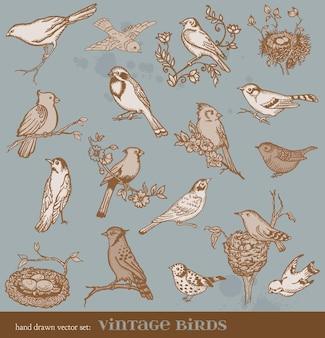 Ręcznie rysowane zestaw ptaków - różnorodność vintage ptaków