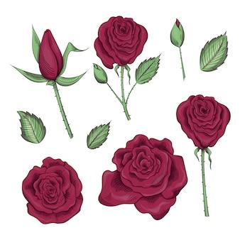 Ręcznie rysowane zestaw róż, pąków róży i liści