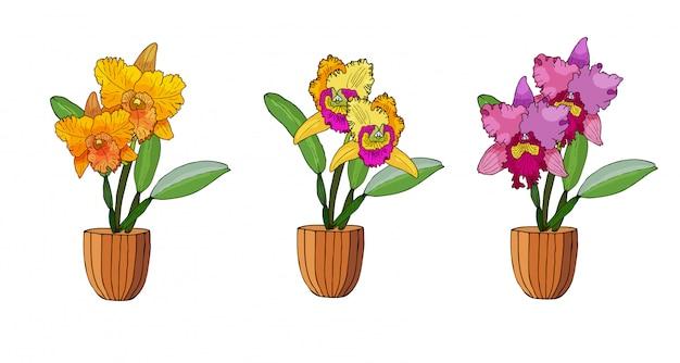 Ręcznie rysowane zestaw storczyków w donicach.