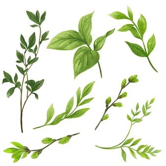 Ręcznie rysowane zestaw zieleni akwarela, gałęzie i liście, ilustracja.