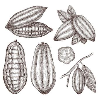 Ręcznie rysowane ziarna kakaowe.