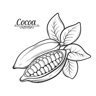 Ręcznie rysowane ziarna kakaowego.
