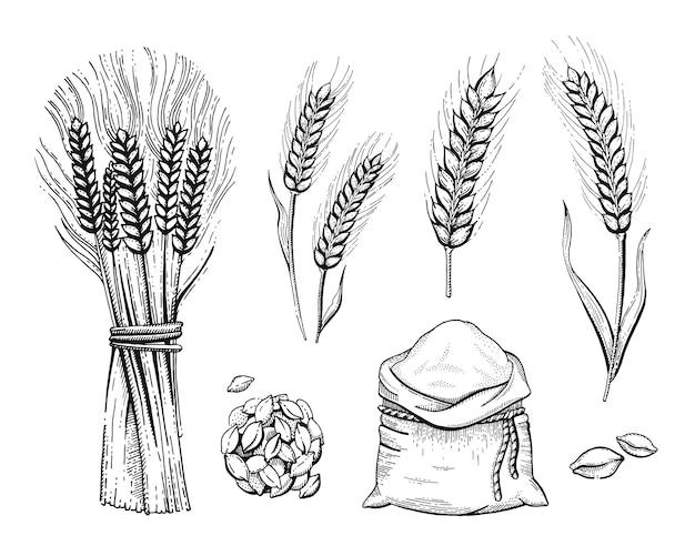 Ręcznie rysowany zestaw piekarniczy: worek mąki, kłos pszenicy, naszkicowana koncepcja. czarny atrament rysowanie linii na białym tle. grafika żywności ekologicznych zbóż. grawerowanie ikon retro vintage