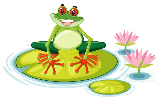 Red eyed tree frog on lily pad