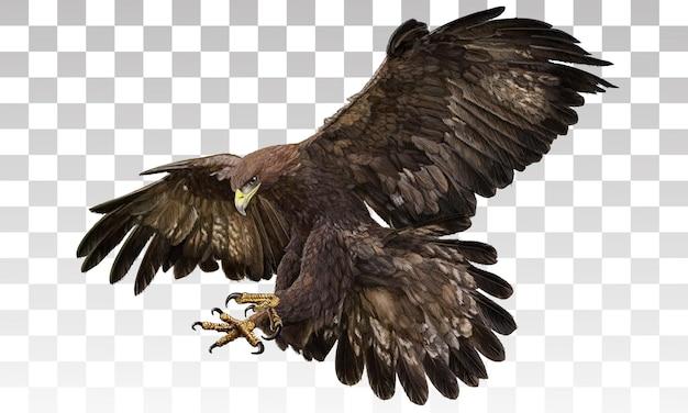 Ręka lądowania złotego orła rysować i malować na szarym białym tle w kratkę ilustracji wektorowych