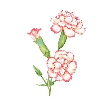 Ręka rysująca goździka kwiatu ilustracja