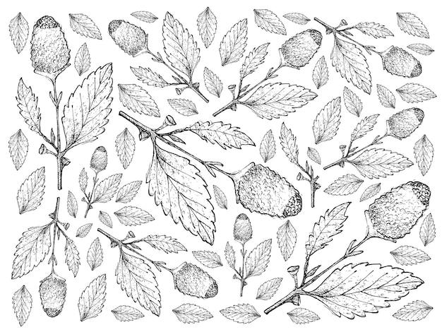 Ręka rysująca świeży paracress rośliien tło