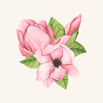 Ręka rysujący spodeczka magnolii kwiat odizolowywający