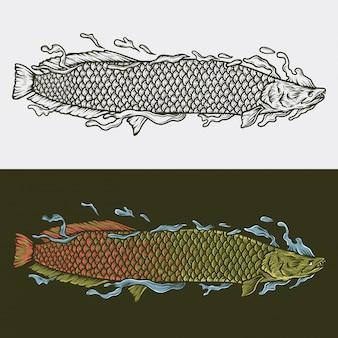 Ręka rysunek vintage ilustracji wektorowych arapaima