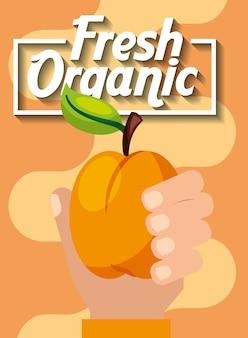 Ręka trzyma świeże brzoskwinie organiczne owoce