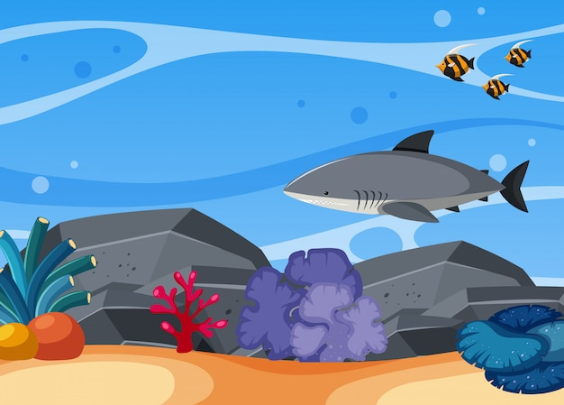 Rekin i ryba pływa w morzu