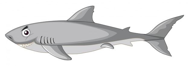 Rekin na białym tle