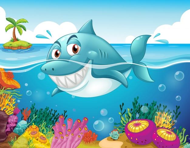 Rekin w morzu z koralowcami