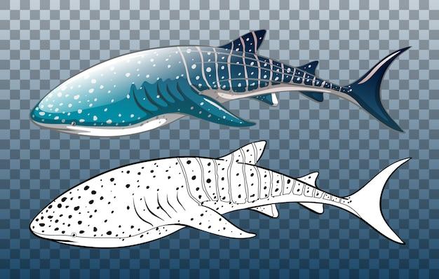 Rekin wielorybi z bazgroły na przezroczystym