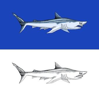 Rekin wygrzewający się lub piaskowy morskie drapieżne zwierzęta morskie życie ręcznie rysowane vintage grawerowane szkic ryby oceaniczne