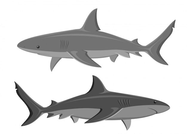 Rekiny. set dwa wielkiego rekinu odizolowywającego na bielu. wektor.