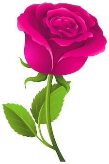 Różowa róża z zielonymi liśćmi