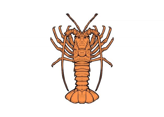 Rockowy losowanie homara