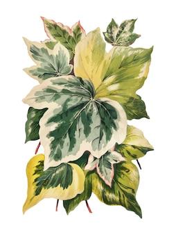 Rocznik ilustracja i zasadza liście