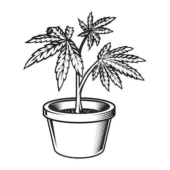 Rocznik marihuany roślina w garnku