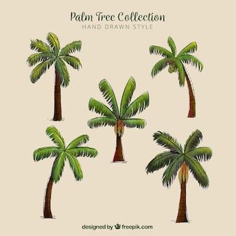 Rodzaje ręcznie rysowane palmy zestaw