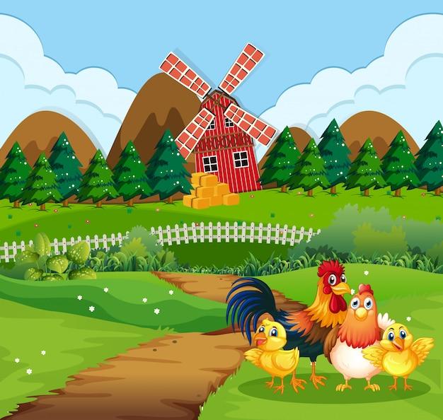 Rodzina kurczaka w pola uprawne