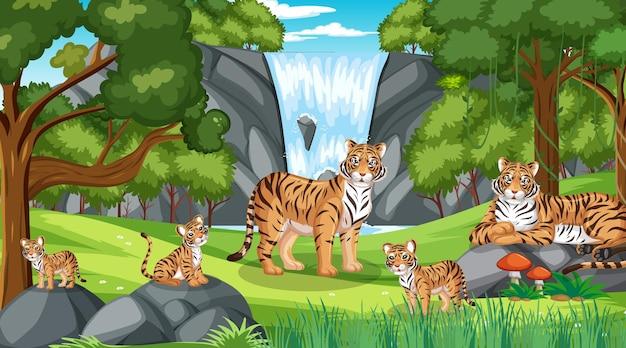 Rodzina tygrysów na leśnej scenie z wieloma drzewami