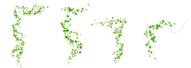 Rogi bluszczu, pnącze winorośli z zielonymi liśćmi pnączy do dekoracji obramowania lub ramki na białym tle. realistyczna ilustracja 3d