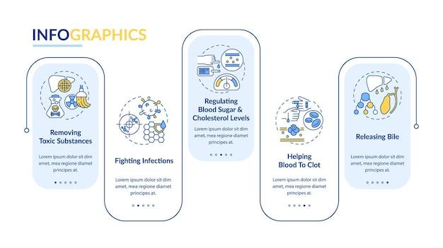 Ról wątroby wektor infographic szablon. uwalnianie elementów projektu prezentacji żółci, regulacji cholesterolu. wizualizacja danych w 5 krokach. wykres osi czasu procesu. układ przepływu pracy z ikonami liniowymi
