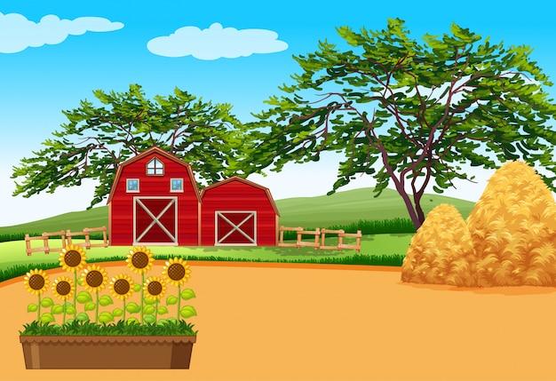 Rolna scena z stajnią i kwiatami na gospodarstwie rolnym