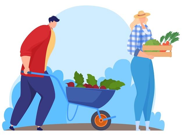 Rolnicy zbierają warzywa. ilustracja