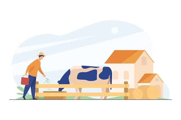 Rolnik karmi krowę trawą.