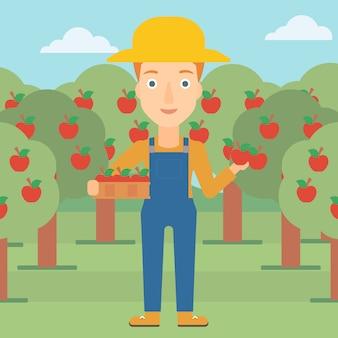 Rolnik zbierający jabłka