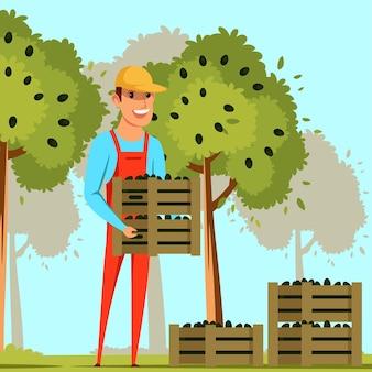 Rolnik zbierający oliwki ilustracja mężczyzna robotnik rolny trzymający drewniane pudełka z czarnymi oliwkami