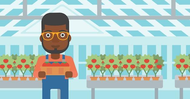 Rolnik zbierający pomidory