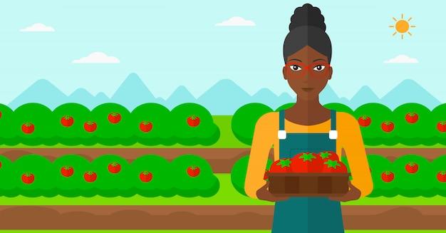 Rolnik zbierający pomidory.