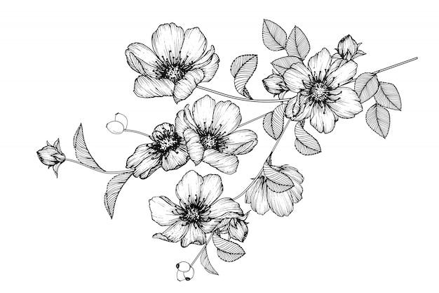 Rose leaf i kwiatowe rysunki. archiwalne ręcznie rysowane ilustracje botaniczne. wektor.