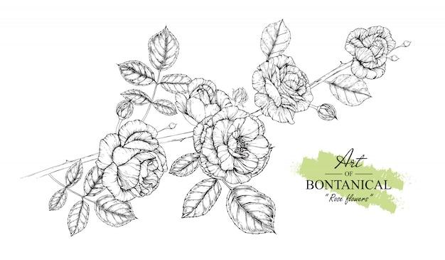 Rose leaf i kwiatowe rysunki